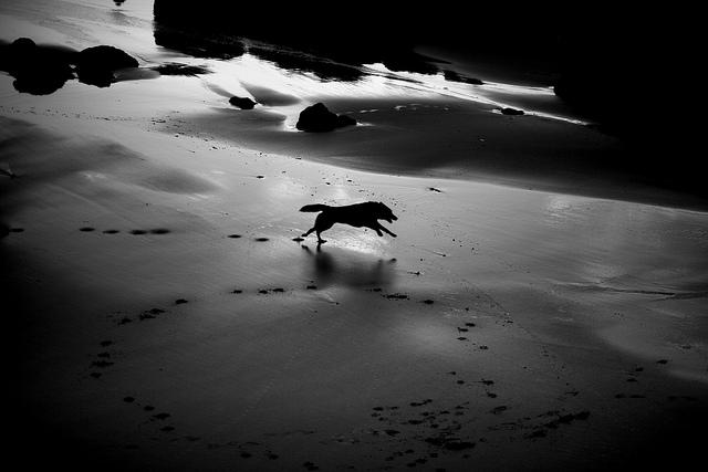 Photo by Pedro Moura Pinheiro.