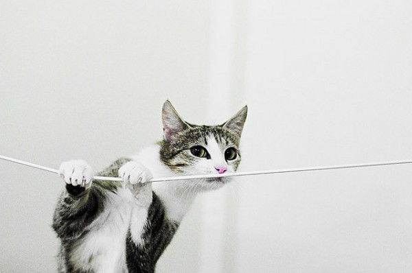 cat on a string