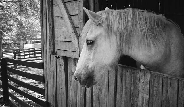 horse-1042388_640